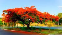 Avenida Dr. Oswaldo Scatena exibe bela sequência de flores e cores vigorosas na primavera-verão